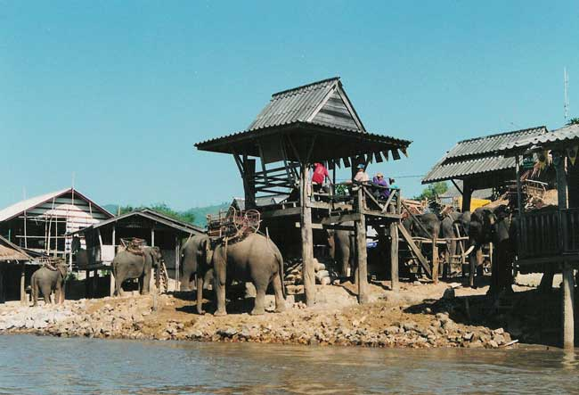 Elephants in the Karen village. Photo by Janna Graber