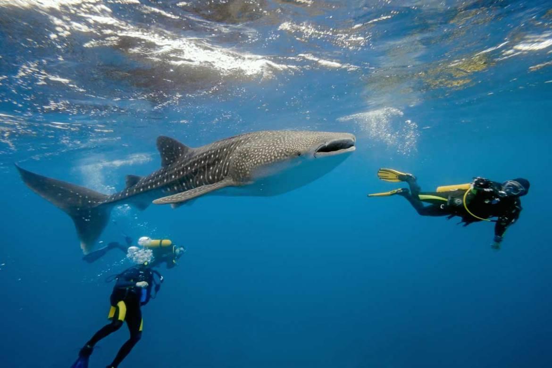 whale-sharks-1.jpg